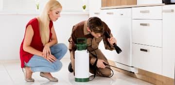 Ant Treatment Plan Albany NY - Capital Pest Removal