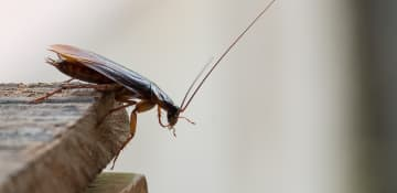 Cockroach Control Albany NY