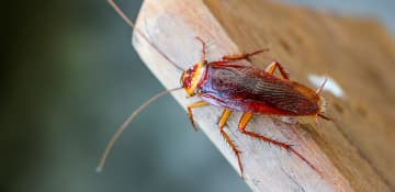 Commercial Cockroach Control - Capital Pest Removal Albany NY