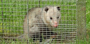 Commercial Wildlife Removal - Capital Pest Removal Albany NY