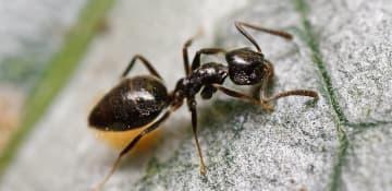 House Ant Exterminator Albany NY - Capital Pest Removal