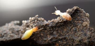 Termite Treatment Albany NY - Capital Pest Removal