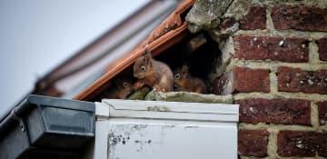 Wildlife Removal Albany NY - Capital Pest Removal